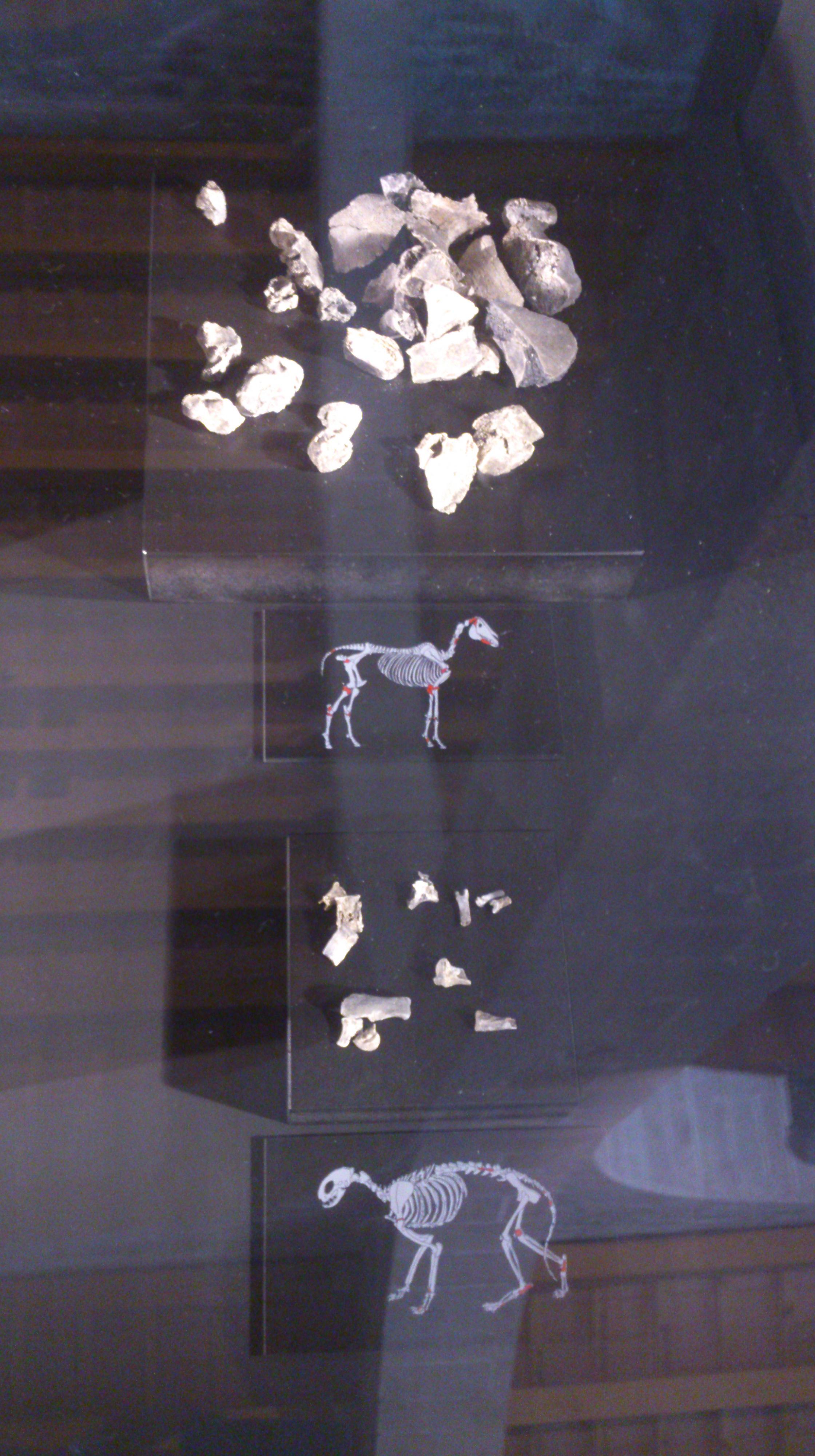 Abajo, huesos de gato hallados en un yacimiento arqueológico como sacrificio a los dioses. Foto realizada en la exposición Vikings del Museu Marítim de Barcelona.