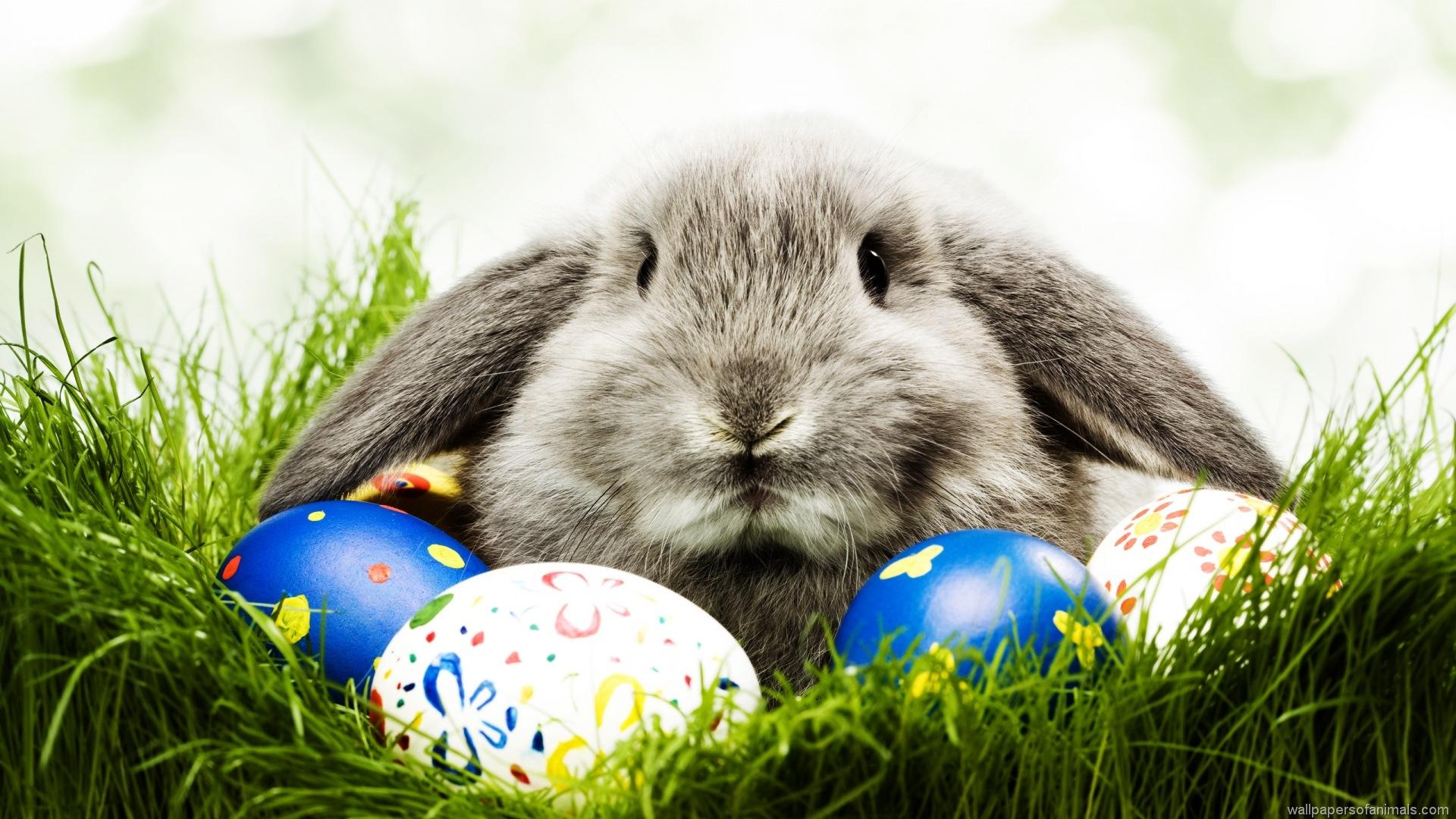 Conejo y huevos de pascua. (http://newevolutiondesigns.com/20-hd-easter-wallpapers)
